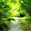 大牟田のあじさい寺でトトロのトンネル発見(大牟田市今山・定林寺)【OMUTA VOGUE】