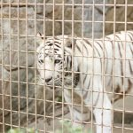 子供の時とは違った目線で楽しめる「大牟田市動物園」大好きだった『ホワイティ』に会いに行ってきました