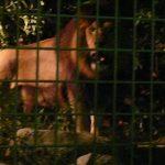 夜の動物たちを観察できる!大牟田市動物園で「夜の動物園」開催