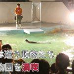 普段とは違う動物たちが見れる!大牟田市動物園の夜を満喫!