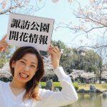 【2018年3月28日時点】桜の開花状況レポート【諏訪公園】