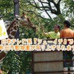 【9月2日放送】日本テレビ系『シューイチ』で大牟田市動物園が紹介されます!