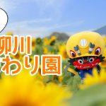冬の柳川ひまわり園へ撮影に行ってきました!開花状況は?