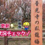 大牟田市の普光寺で臥龍梅の開花状況をチェックしてきました!【2019年2月4日】