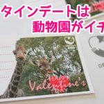 大牟田市動物園でバレンタインデートプラン!スペシャルカードの情報も