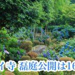 アジサイ寺(定林寺)本堂の磊庭公開は16日まで!【6月14日時点の開花状況】