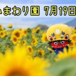 柳川ひまわり園が7月19日から開園!27日は花火も!
