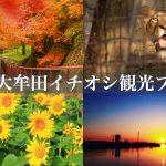 大牟田観光!秋のイチオシプランをご紹介【紅葉・ひまわり畑・光の航路】
