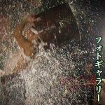 三池本町祇園宮令和二年水(臼)かぶりフォトギャラリー